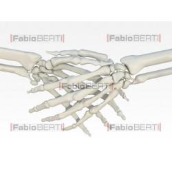 stretta di mani scheletriche