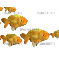 little fish eat big fish