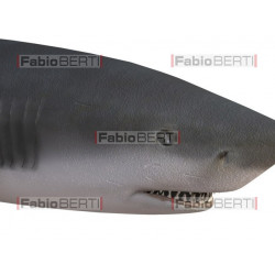 pesce piccolo mangia pesce grande