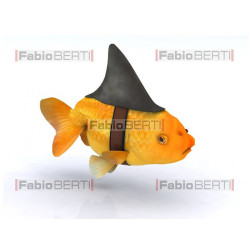 goldfish with shark fin