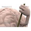 cervello altalena
