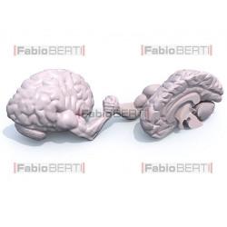 half brains arm wrestling