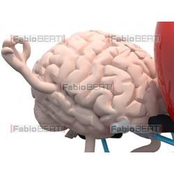 cuore e cervello tandem 1