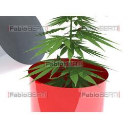 marijuana inside a pill