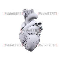 white human heart