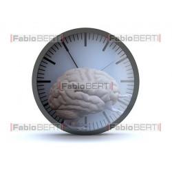 brain hamster clock
