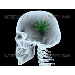 raggi x testa marijuana