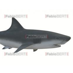 sardine unite contro squalo