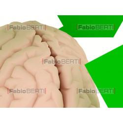 riciclo cervello