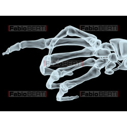 X-ray hand pointing