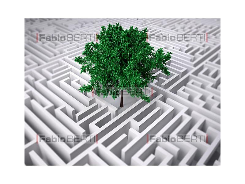 tree inside a labyrinth
