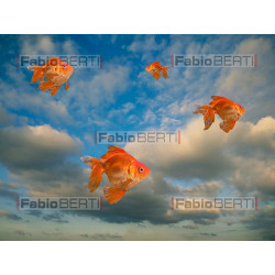 goldfish flying in the sky
