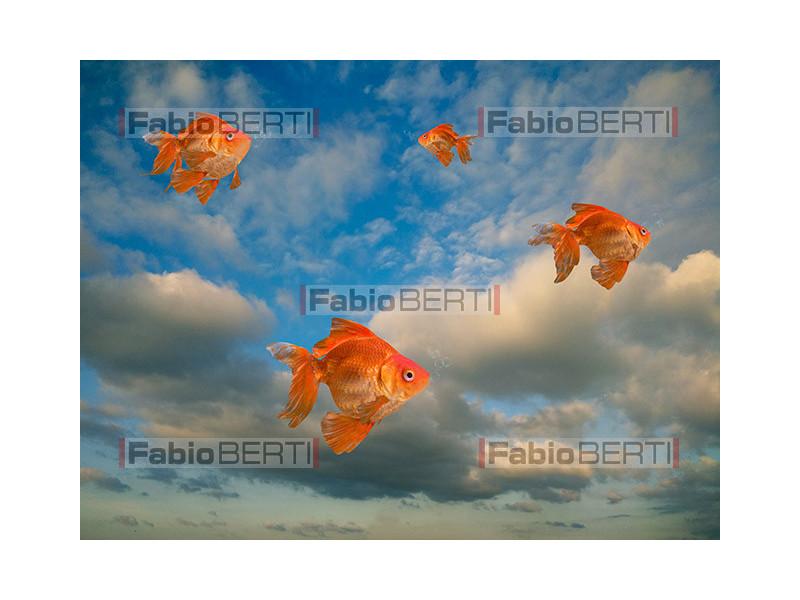 goldfish flying in the sky