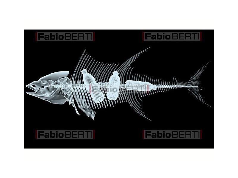 raggi x pesce