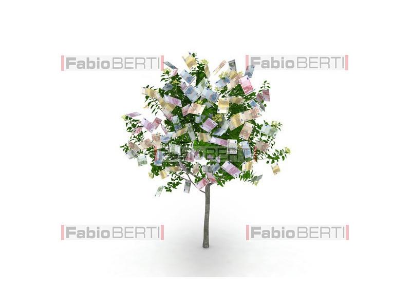 albero euro frutti