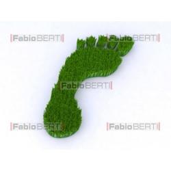 orma su erba