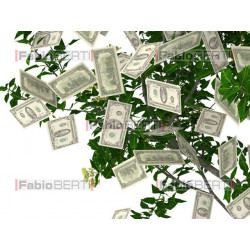 albero dollari frutti