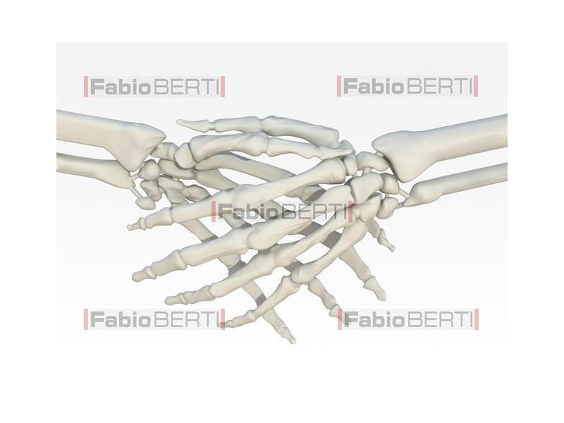 shaking hands skeletal