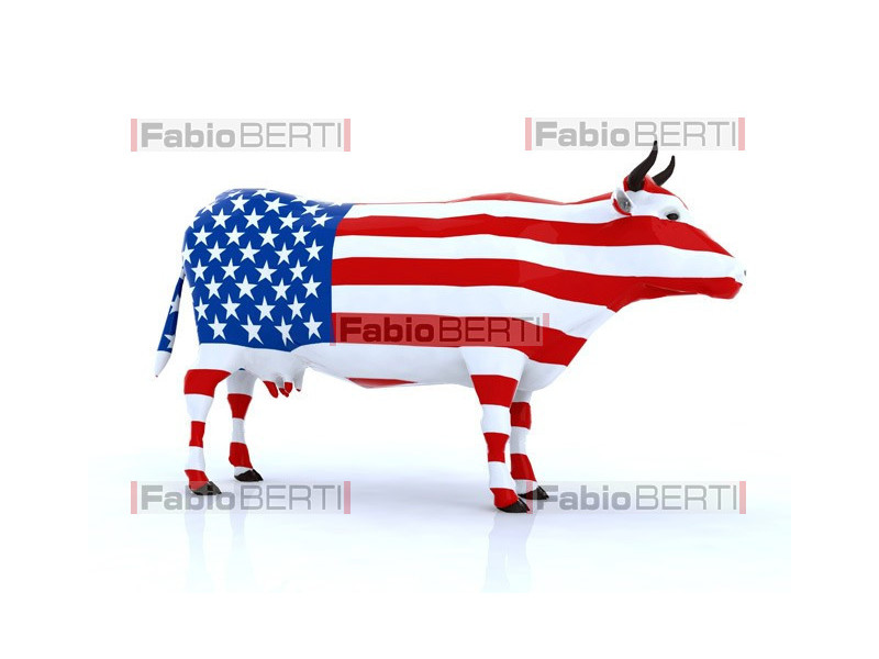 American cow