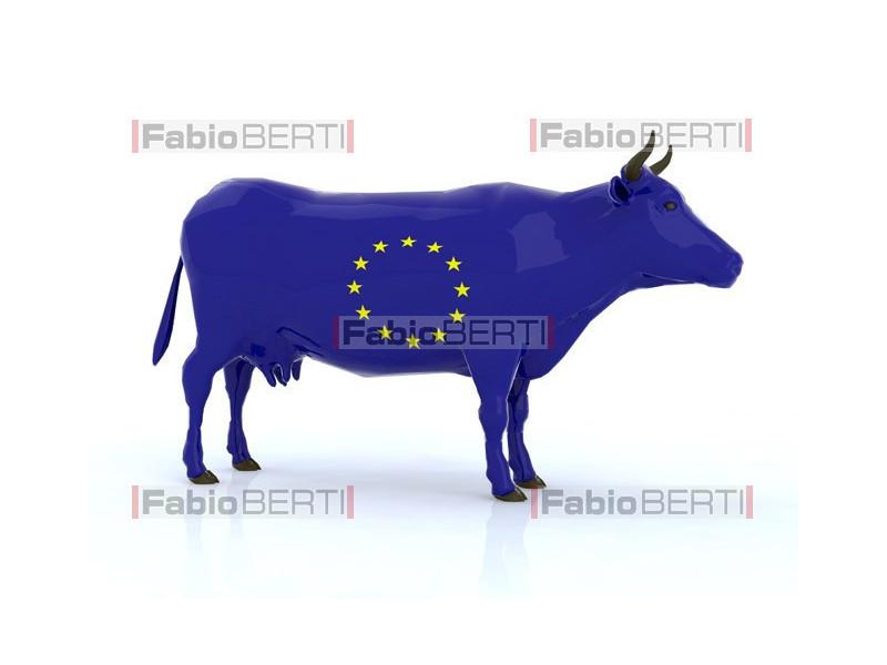 European cow