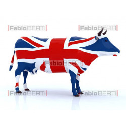 United Kingdom cow