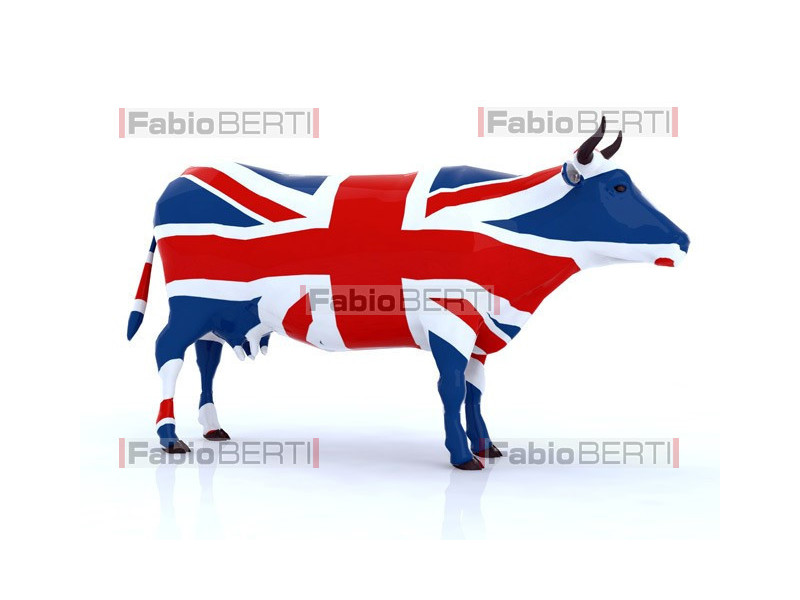 United Kingdom cow