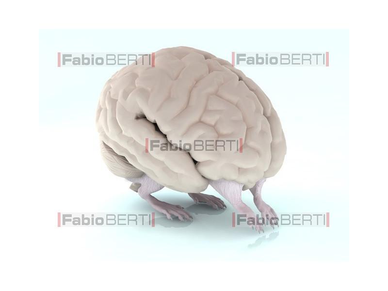 cervello che cammina