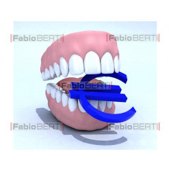 denture and euro