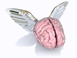 ali al cervello